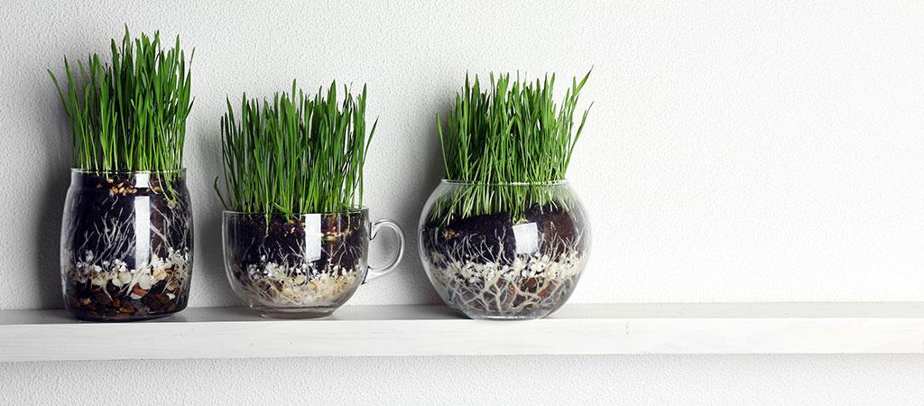 Pon macetas para decorar tus espacios kleenex m xico for Decoracion de plantas en macetas
